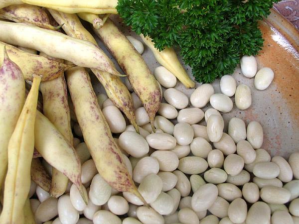 Mojettes de Vendée ou Cocos de Paimpol : délice de base